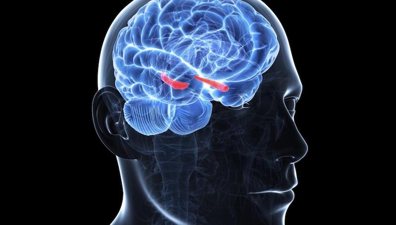 Centar za osećanja koji deo mozga kontroliše emocije