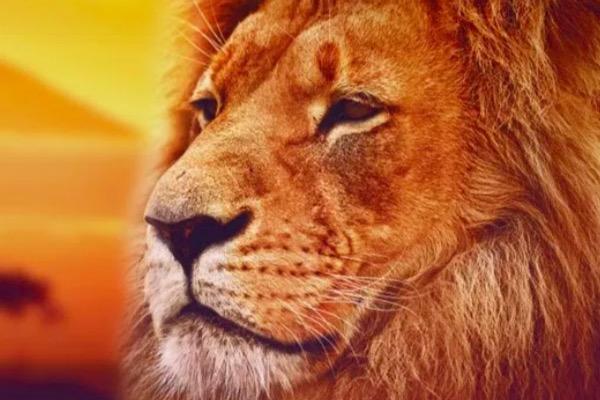 kako osloboditi zver u sebi