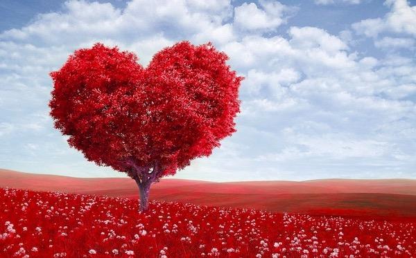 sta je ljubav zaljubljenost